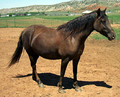 Dark brown mare with mountains in the background