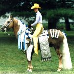 Californio (Tio Lalo x Sissey) 1967 palomino stallion